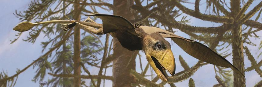 A close-up of dimorphodon